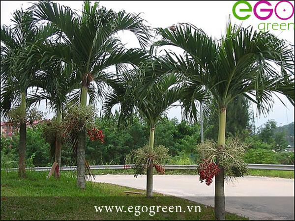 Bảo dưỡng cây tại EGogreen