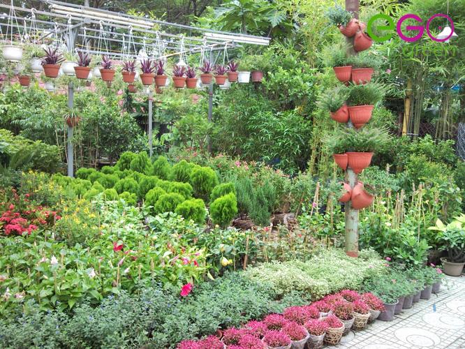 Báo giá thi công cảnh quan, sân vườn: