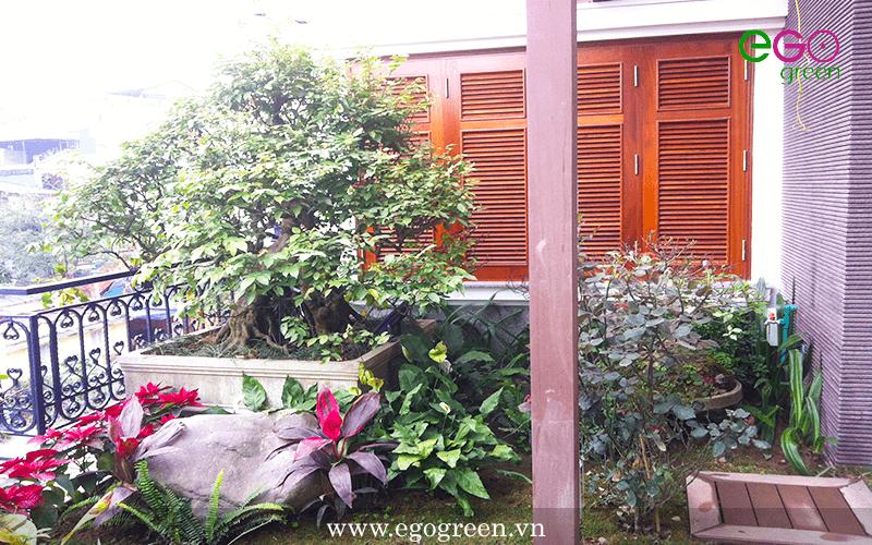 thi công cảnh quan sân vườn
