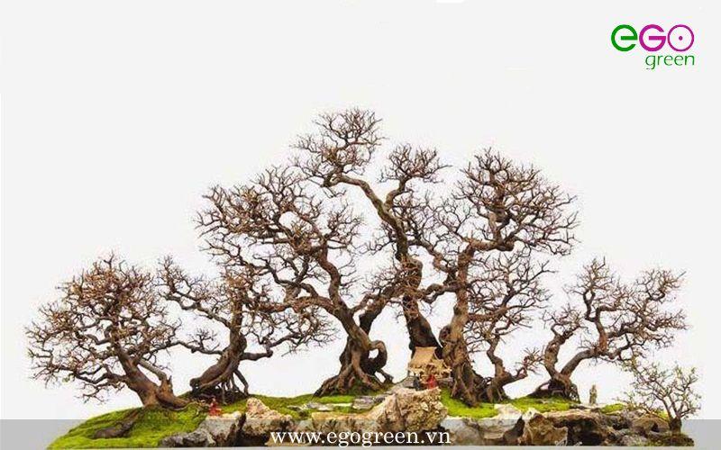 Mãn nhãn với 7 ý tưởng cho cách uốn cây cảnh đặc sắc