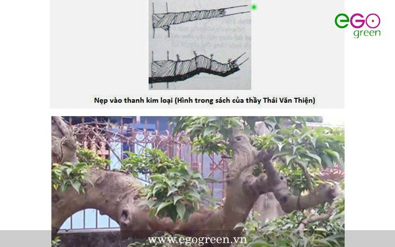 kỹ thuật uốn cây cảnh