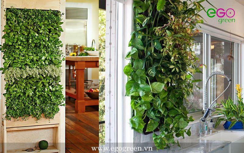 vườn đứng trong nhà