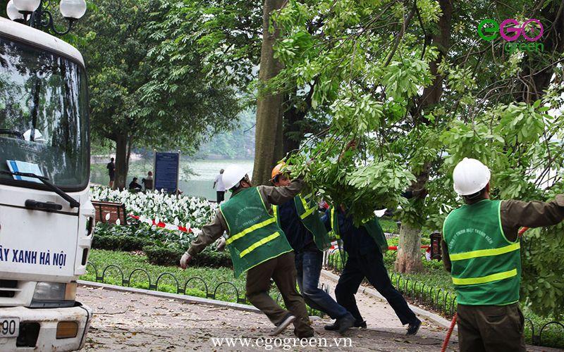 cắt tỉa cây xanh
