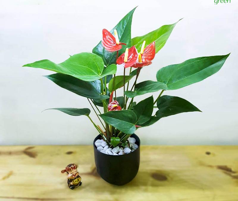 Vẻ đẹp độc đáo của các loại cây phong thủy để trong nhà