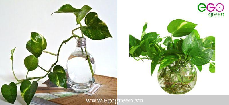 cách trồng cây cảnh trong nước