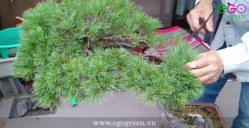 cách uốn cây nhỏ