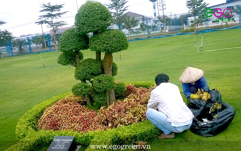 Bảo dưỡng chăm sóc cây xanh theo yêu cầu