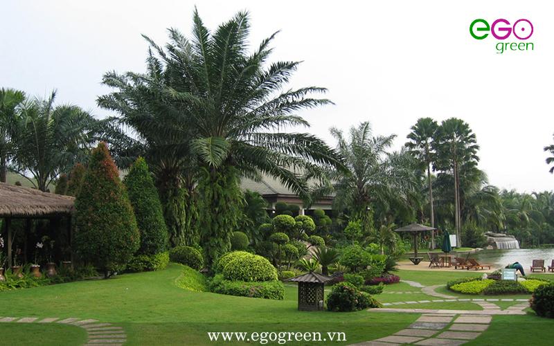 Bảo dưỡng, chăm sóc cây xanh theo yêu cầu