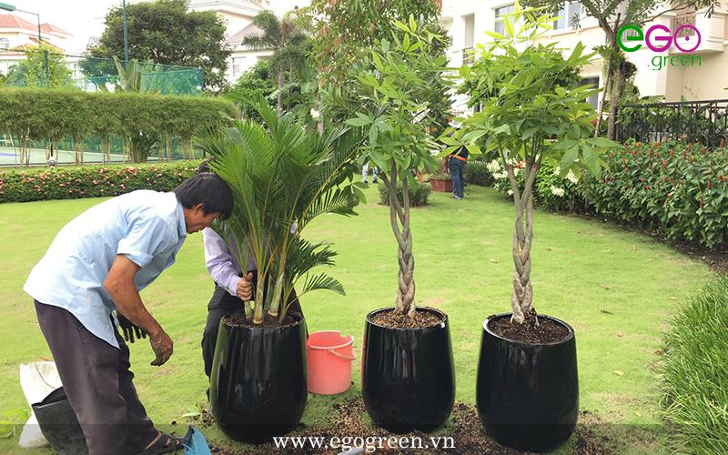 Chăm sóc bảo dưỡng cây xanh hiệu quả
