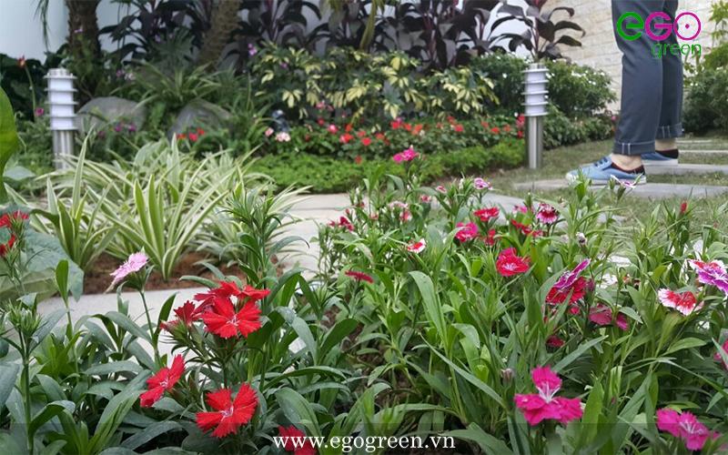 Cây hoa xanh tươi đầy sức sống- EGOgreen mang lại