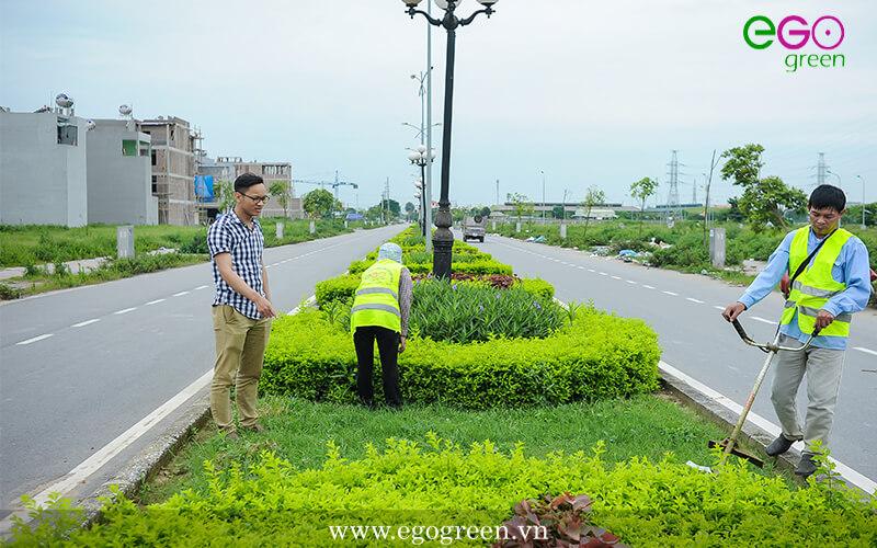 Thi công cảnh quan xanh khu tái định cư Trầm Cá, Nam Định