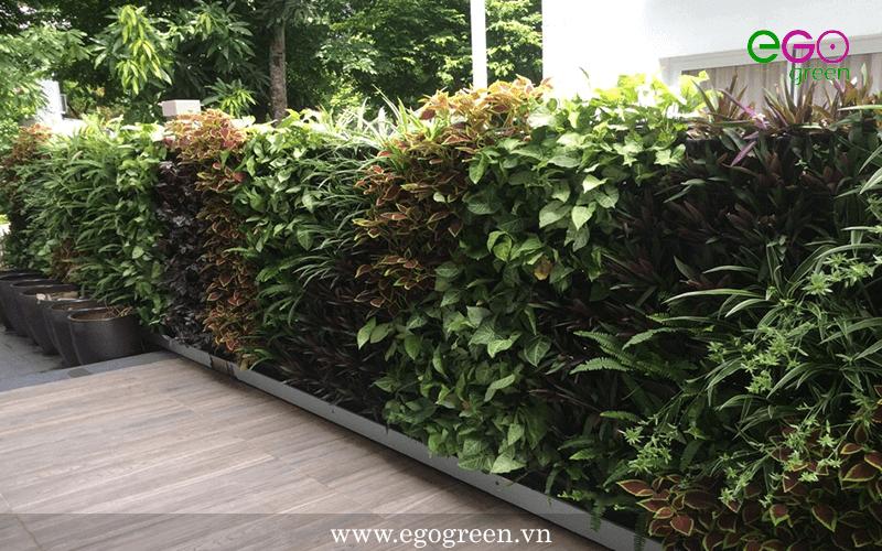Thi công cảnh quan sân vườn biệt thự Anh Trí - biệt thự Vườn Mai Ecopark