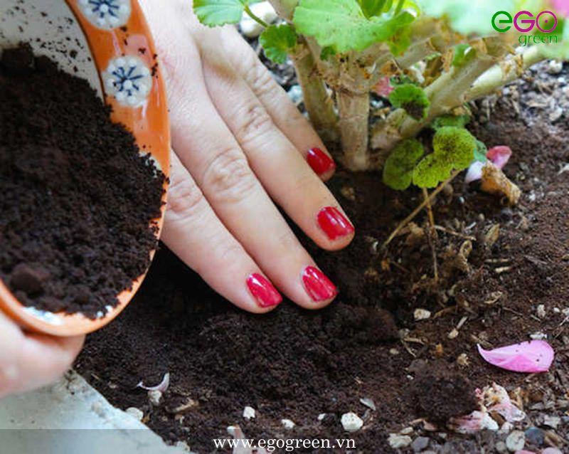mua đất trồng cây cảnh ở hà nội