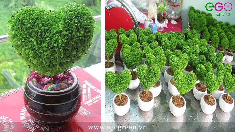 cách trồng cây cảnh để bàn