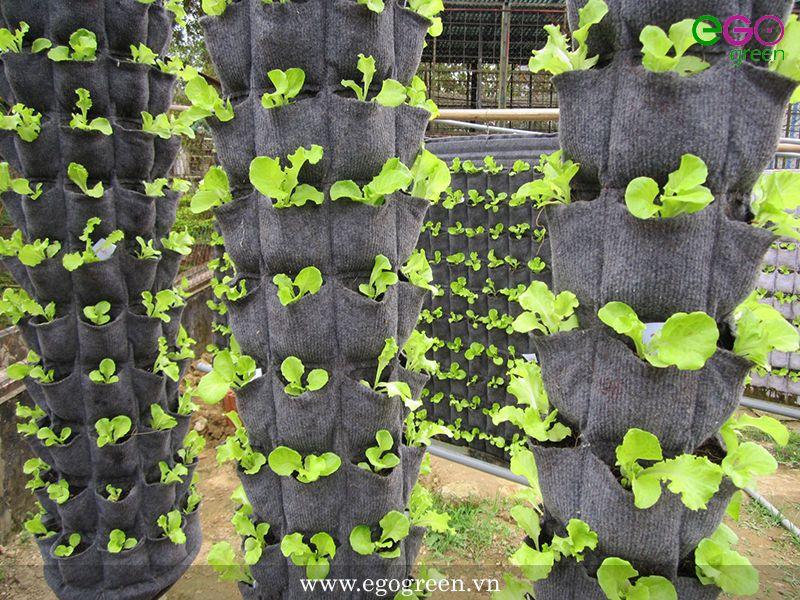 túi trồng cây vườn đứng